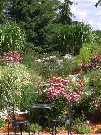 Our Newest Garden ...
